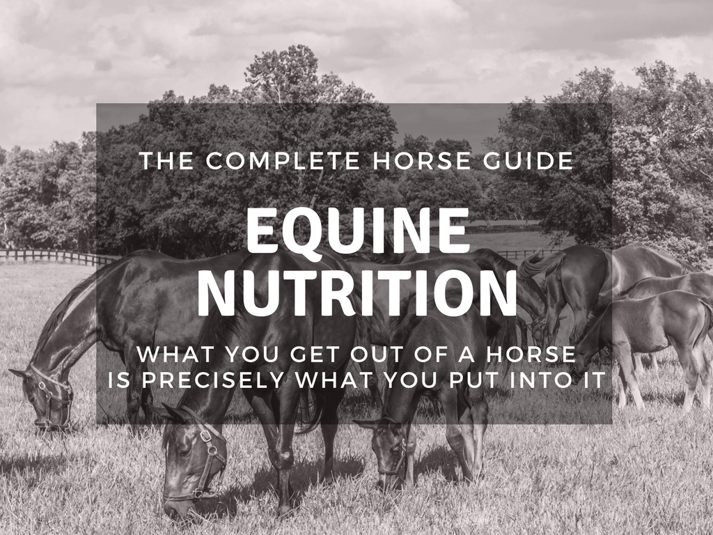 The Complete Horse Equine Nutrition Thumbnail B