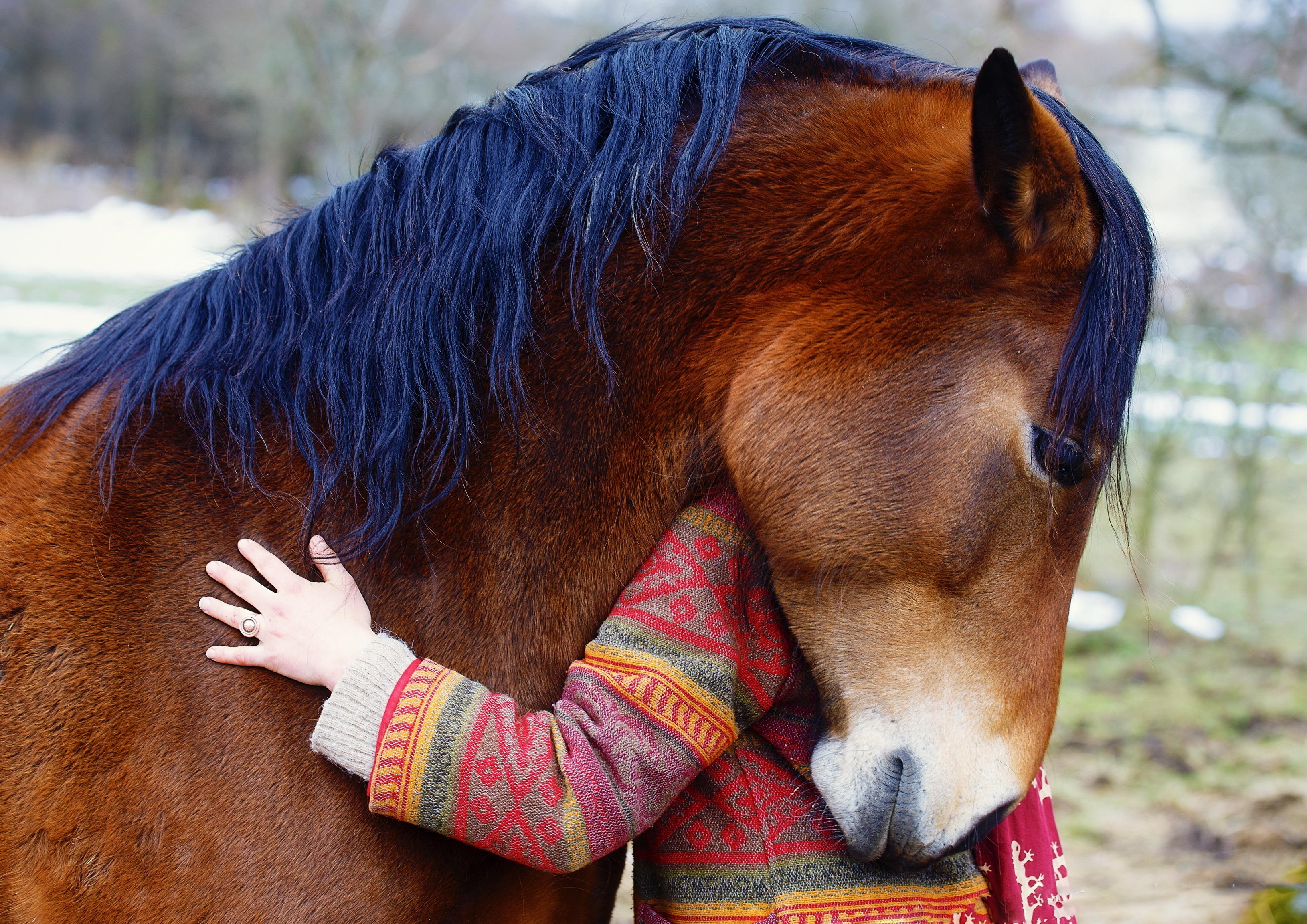 TCH Happy Horse