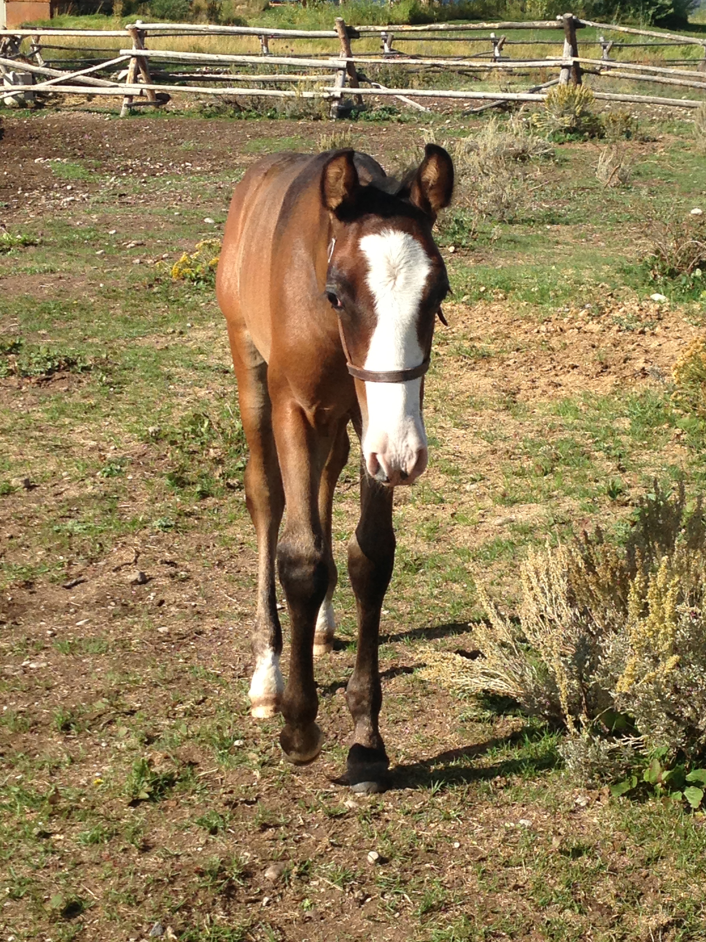 The Complete Horse Foal_ex