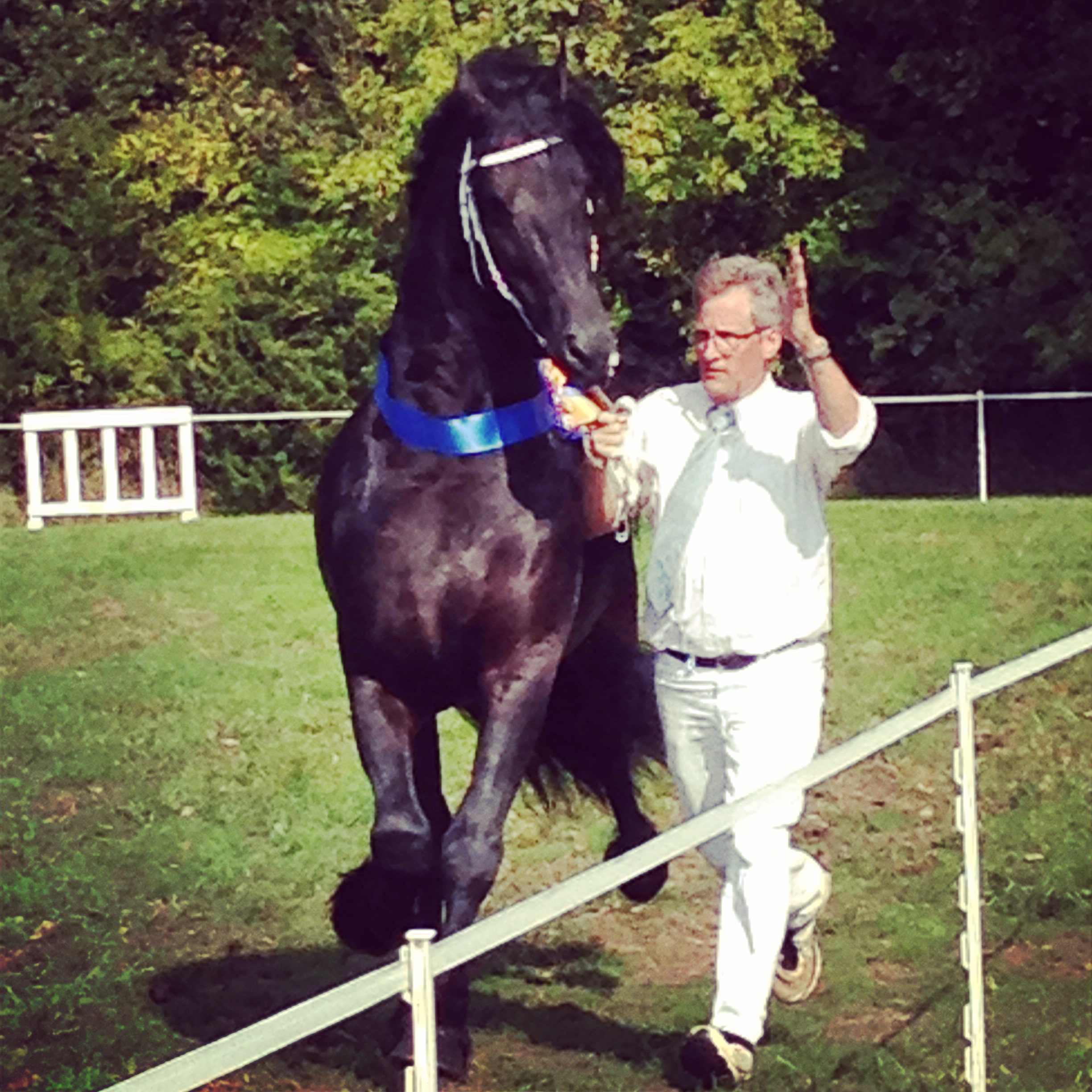 The Complete Horse Friesian Stallion Sape 381_ex